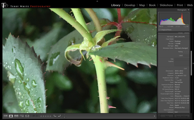 closeup-iPhone6sPlus-greenleaves
